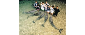 8D6N GOLD COAST WITH DOLPHIN EXPERIENCE AND MELBOURNE