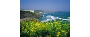 6D5N JEJU ISLAND & SEOUL MINI PRIVATE TOUR