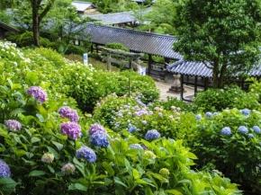9D6N Floral Indulgence Sanyo & Western Japan