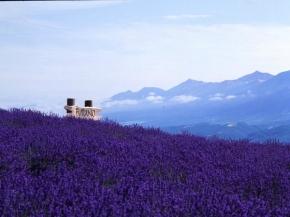 9D6N Lavender Story In Hokkaido & North Central Japan