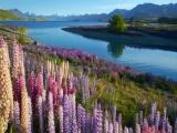 8D6N Amazing South New Zealand (NZ08D)
