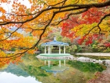 7D6N SOUTHERN BEAUTY OF KOREA (SEP -MAR20)