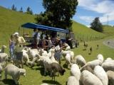 8D7N New Zealand North Island Self-Drive