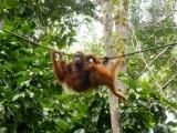 5D4N Kuching Adventure Tour