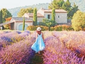 Uniworld 8D Burgundy & Provence