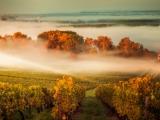 Uniworld 8D Brilliant Bordeaux