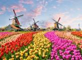 Uniworld 8D Holland & Belgium at Tulip Time