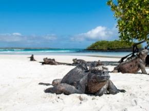Celebrity Cruises 7N Galapagos Northern Loop