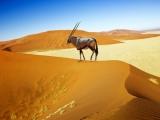 Trafalgar 14D Namibia Explorer