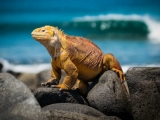 Celebrity Cruises 7N Galapagos Southern Loop Cruisesouth